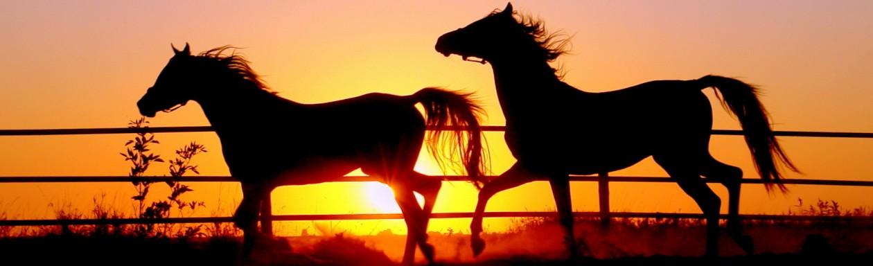 Vilniaus Equestrian Sport Center-VESC